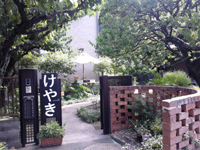 kosho_keyaki.jpg