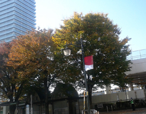 shimura_no_ki.jpg